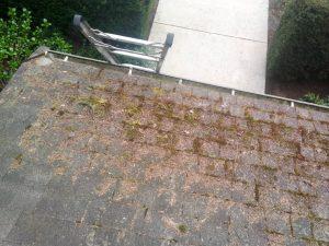 Roof Maintenance Moss